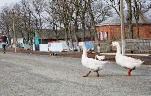 Как проехать в Азов-сити Из Ростова-на-Дону нужно выехать по указателям на Азов.  После въезда в г...