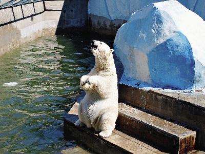В местном зоопарке представлено около 11 тысяч видов животных.