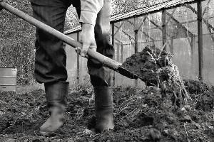После войны огороды на дачах были спасением.
