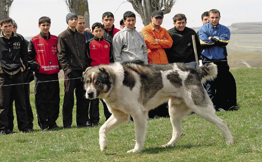 «Молодец! Молодец! Хороший пес!» – звучит на национальных языках