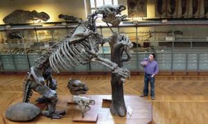 Палеонтологические музеи хранят еще много тайн.