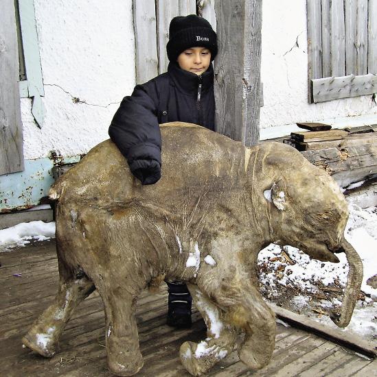 37 000-летний мамонтенок с сыном оленевода, который нашел его в тундре.