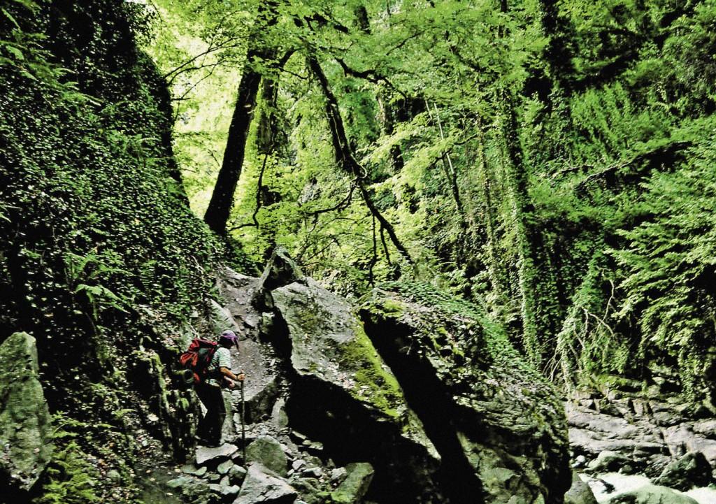 Таких девственных мест, как это, в ущелье Кахетии, в Грузии достаточно.