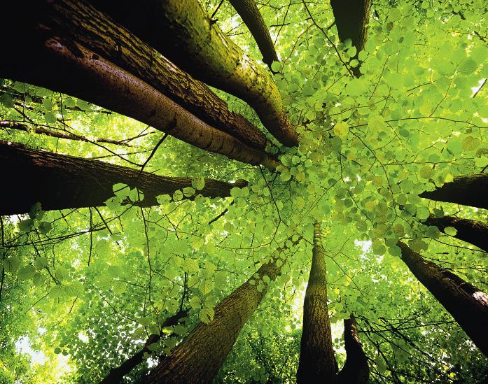 Здесь растут самые высокие деревья в Пермском крае: их высота – за 40 метров!