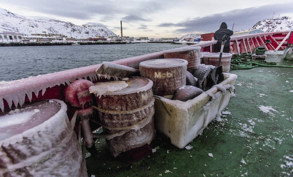 В Баренцевом море жизни больше, чем на суше. Кроме трески и пикши рыбаки вылавливают сайду, зубатку, камбалу, селедку. Попавших случайно в сети крабов рыбаки должны выбросить за борт.