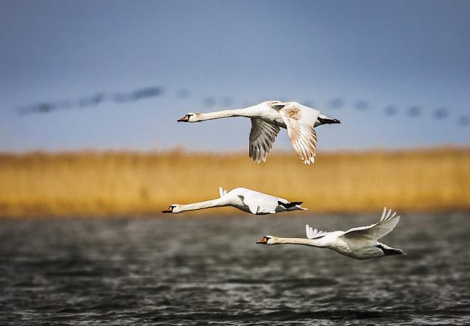 Астрахань – любимое место охотников и рыбаков. Но лучше все же отправляться туда с фоторужьем.
