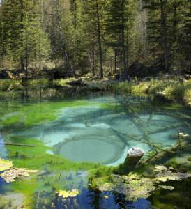 Алтай. Гейзер в лесном озере