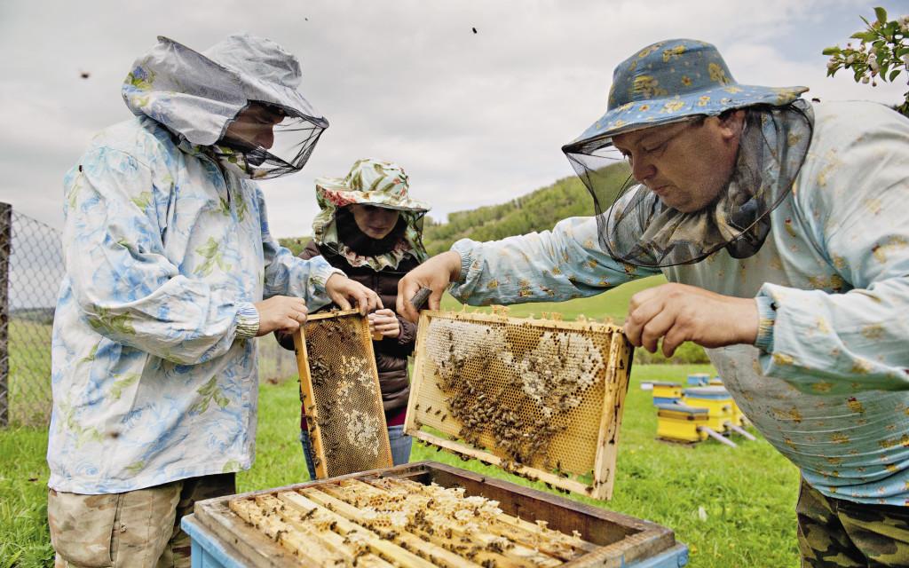 Теплых месяцев на Алтае немного, но за это короткое время местные пасечники умудряются собрать приличный урожай.