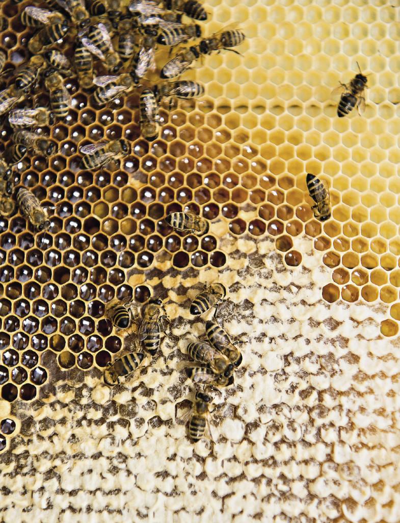 Кроме меда и его производных на пасеке можно купить цветочную пыльцу, пчелиный воск, маточное молочко, прополис.