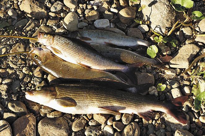 Рыбалка на реке Соплесе. Пермский край