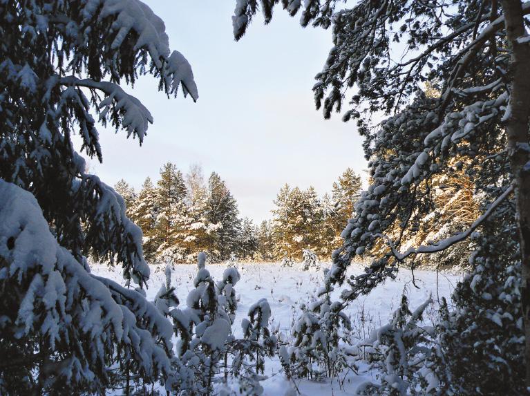 Окрестности Вологды – здесь можно насладиться по-настоящему зимними пейзажами.