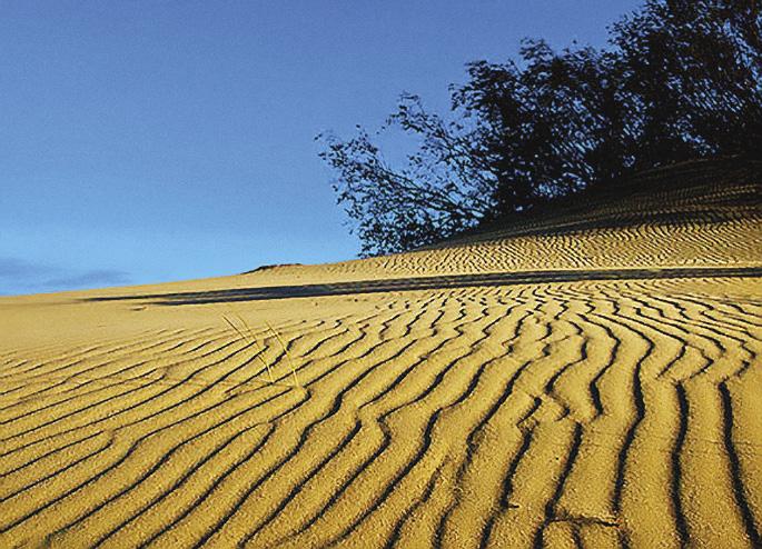 В XIX–XX веках людям удалось остановить песчаную катастрофу на косе, но пустыня не сдается.