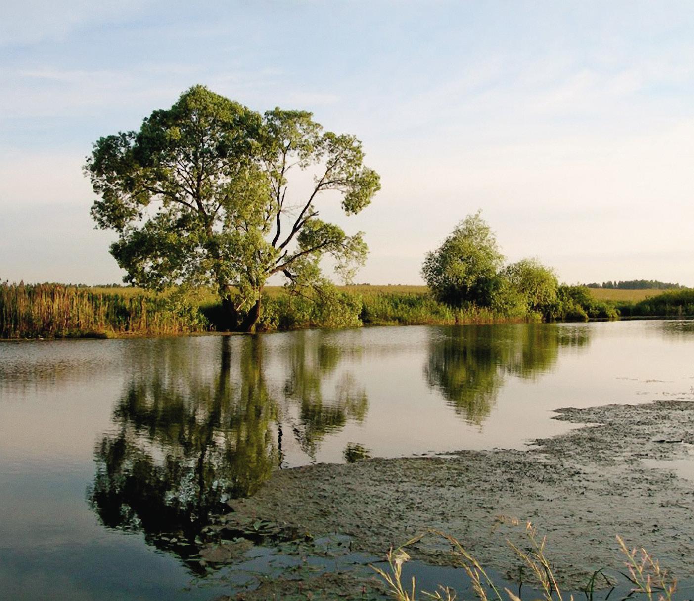Река Сестра. Типичный пейзаж средней полосы России...