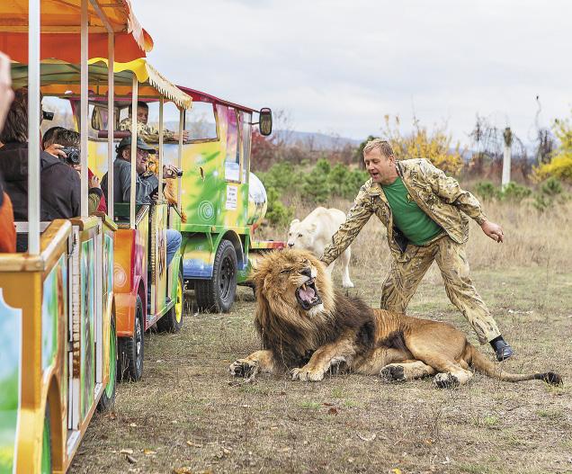 А львы парка и вовсе его боятся...