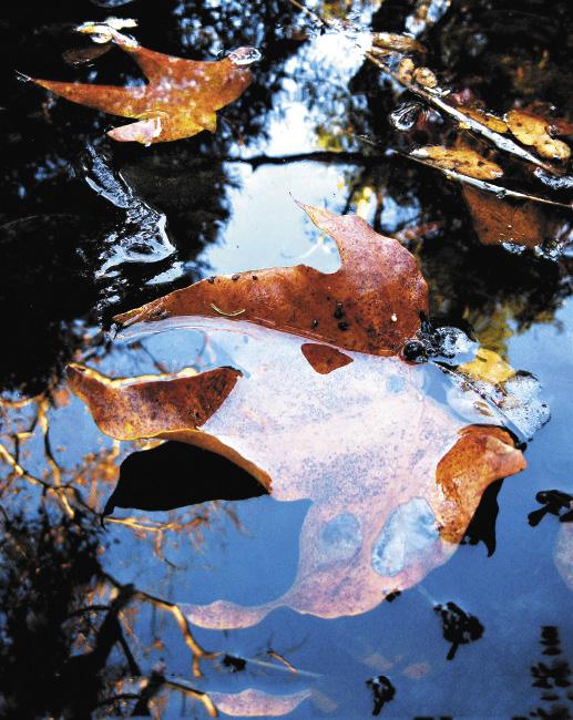Близость к воде – это близость к природе.