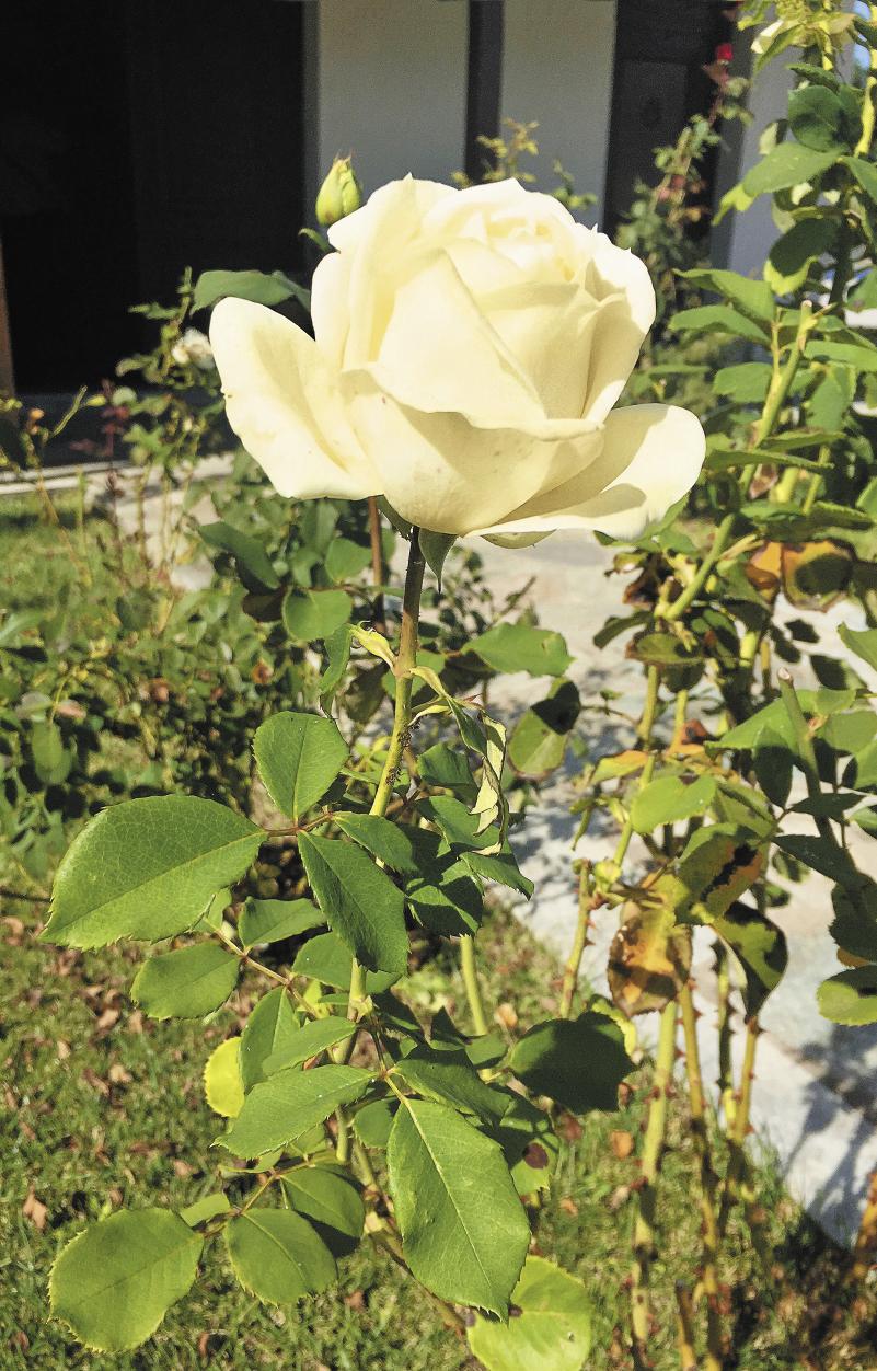 Македонцы – искусные садовники. Цветники – неотъемлемая часть здешних двориков.