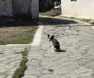 Бродячие собаки Козани имеют полное право пользоваться объектами городской инфраструктуры наравне с людьми.