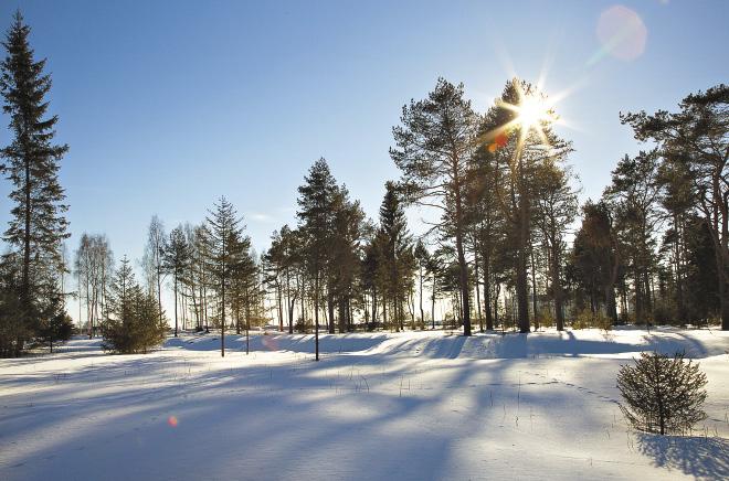 Прогулка по зимнему лесу – отличный способ зарядиться энергией!