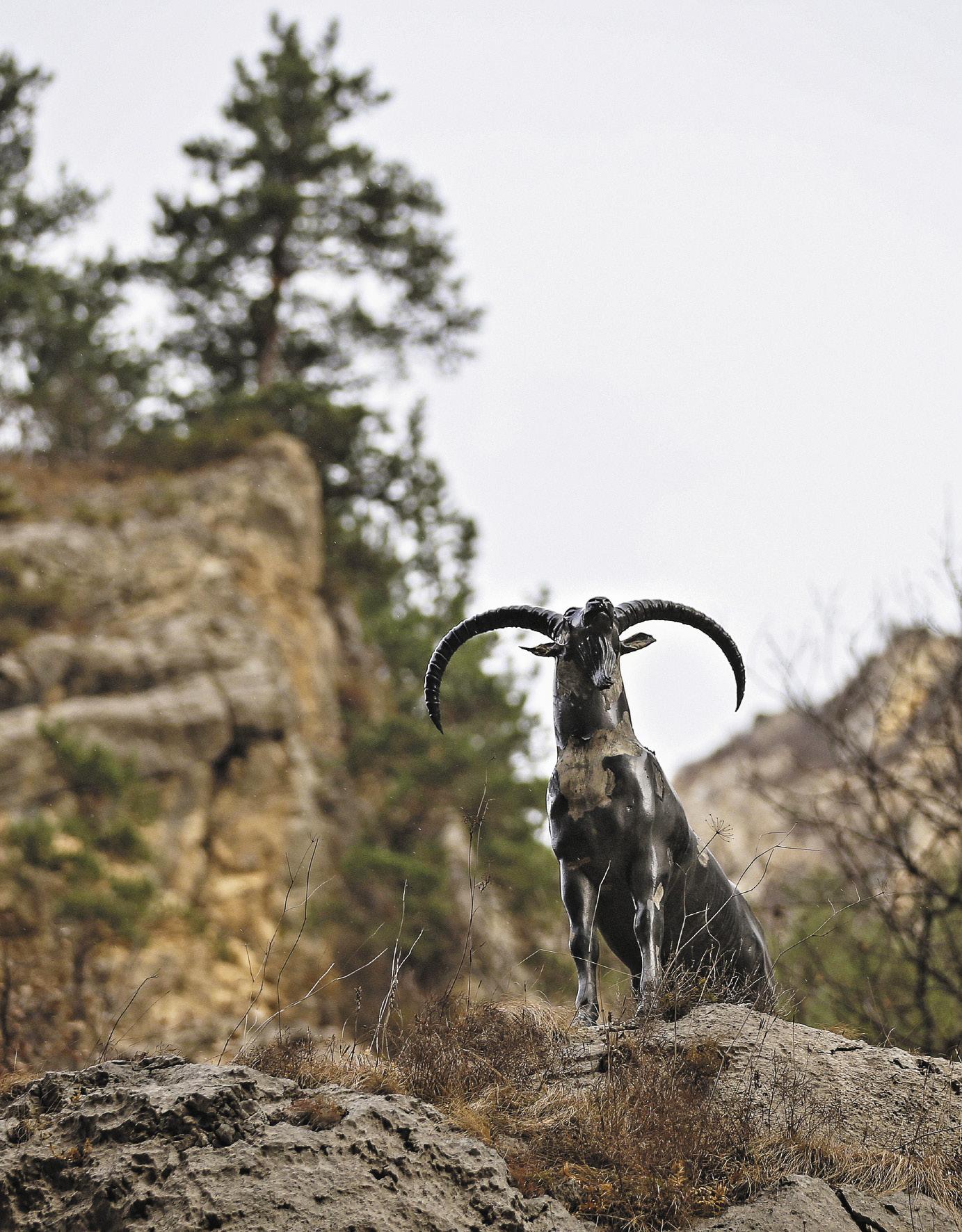 К сожалению, горного козла в Аргунском ущелье сегодня встретишь не часто. На снимке изображена всего лишь его скульп- тура, хотя издалека она и похожа на настоящего дикого животного.