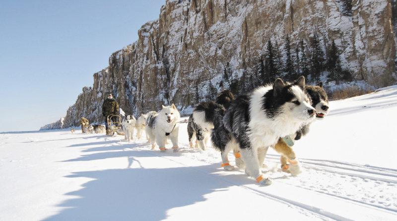Прокатиться на якутских лайках мечтает каждый – впечатление на всю жизнь.