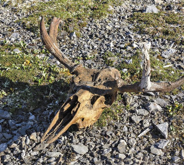 Не убранные с полей черепа животных тоже придают мистицизма острову.