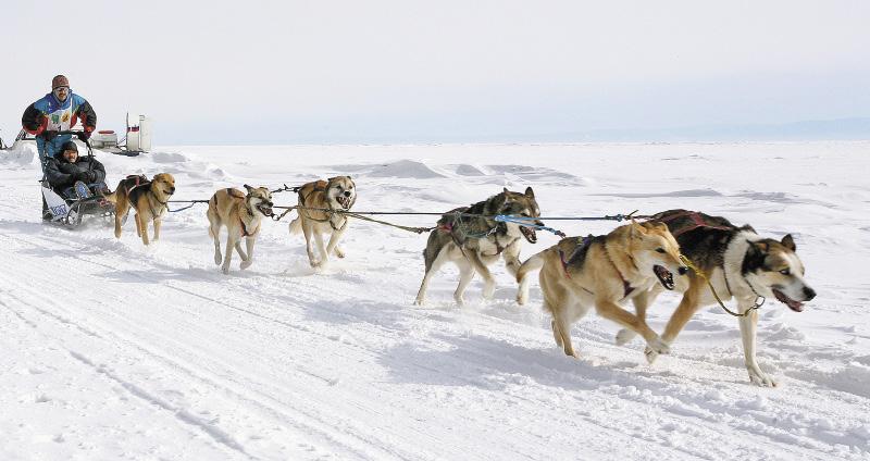 Гонки на собачьих упряжках Baikal Race любят не только участники, но и зрители.