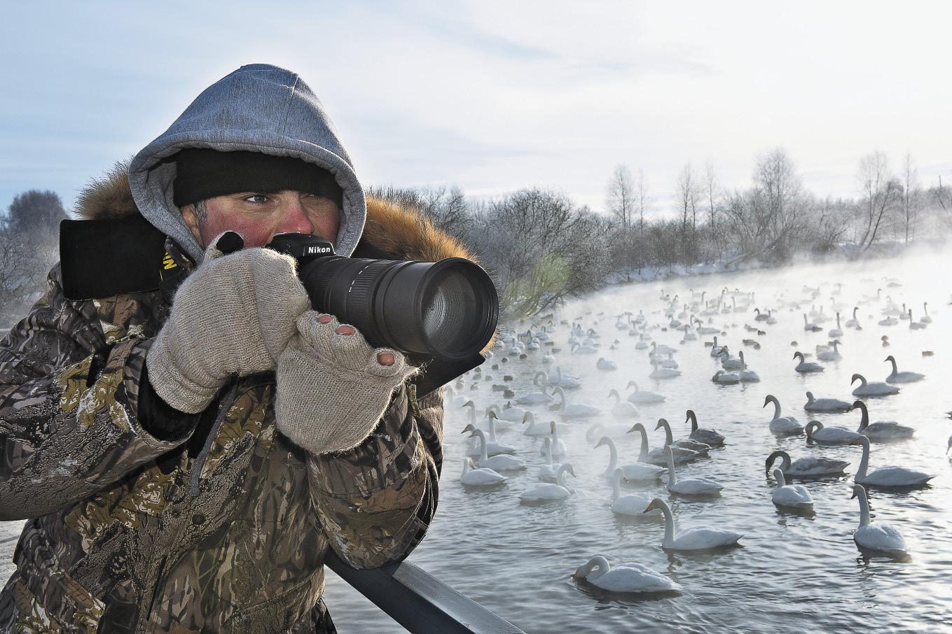 Сотни лебедей собираются зимой на озере Светлом – есть отличный повод поймать удачный кадр. Московский фотограф-анималист Кирилл Горелов фотографирует редкую красно- книжную птицу.