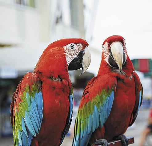 Фото с обезьянкой или попугаем – верная примета южных курортов.