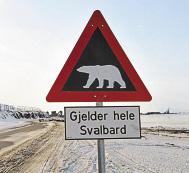 Такие знаки, предупреждающие об опасности встречи с белым медведем, на Шпицбергене установлены не зря. Голодный мишка очень опасен. На архипелаге обитают около 3000 белых медведей – это в несколько раз больше числа проживающих на Шпицбергене людей.