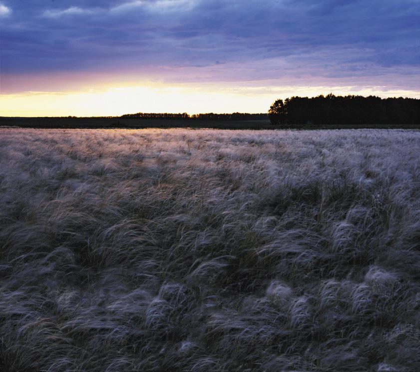 Куликово поле находится в Тульской области, в 320км от Москвы и в 130км от Тулы.