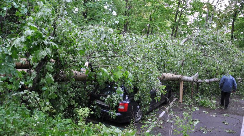 Ураган в Москве 29 мая 2017 года (ФОТО)