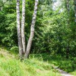 Тимирязевский парк: печальная участь зеленого острова