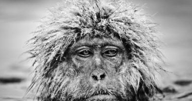 Работы любимого фотографа принца Уильяма покажут в Москве
